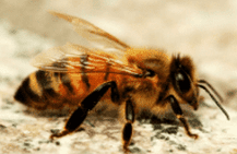 Bee image, bee control, bees, pest control, exterminator